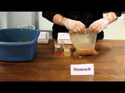 making poothe digestive system youtube