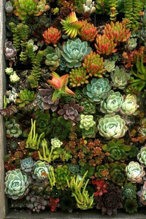 beautiful succulent gardens succulents beautiful succulents garden pinterest