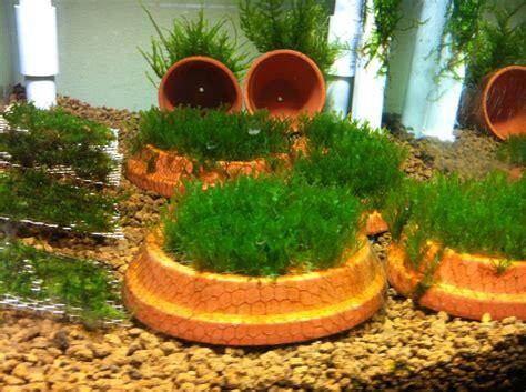 diy mesh aquarium planters petdiys com