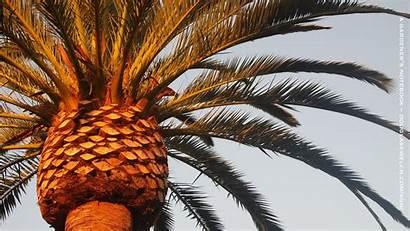 Palm Tree Desktop Wallpapers Trees Palms Computer