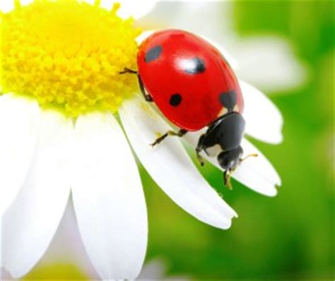 ladybugs your can eat other summer activities