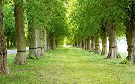 wallpaper nature green trees android  high  hd