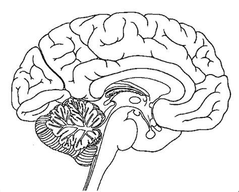 labeled brain black and white cuerpo humano para colorear e imprimir