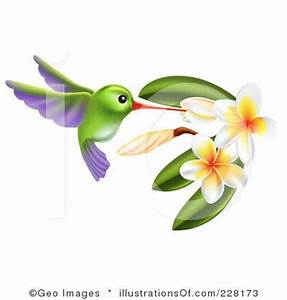 pictures of hummingbird paintings | Hummingbird Clipart ...