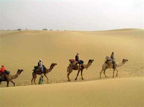 thar desert camels in thar desert explore pakistan