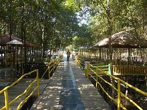 Keliling Hutan Mangrove Bontang