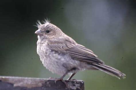 dereila images birds