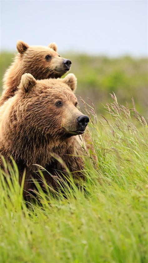 Wallpaper bear cute animals grass 4k Animals #16105