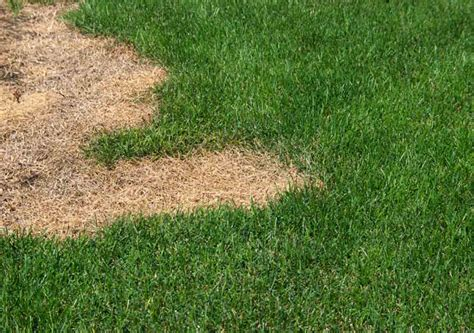 problems  grass  maryland lawns  pick reports
