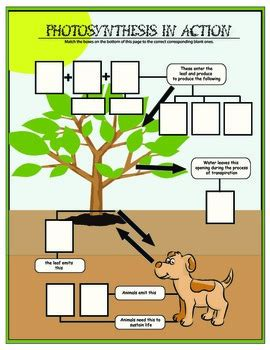 photosynthesis in action activity grade 6 7 8 by practical learning aids