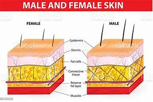 Skin Male And Female Stock Illustration