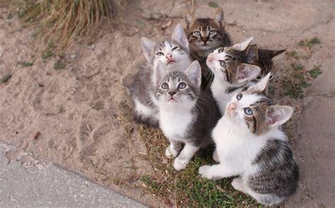 wie viele katzenrassen es gibt katzen ratgeber die