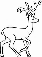 Deer Coloring Pages Drawing Animals Buck Animal Forest Printable Easy Sheets Clipart Doe Draw Whitetail Wildlife Tailed Colouring Mario Super sketch template