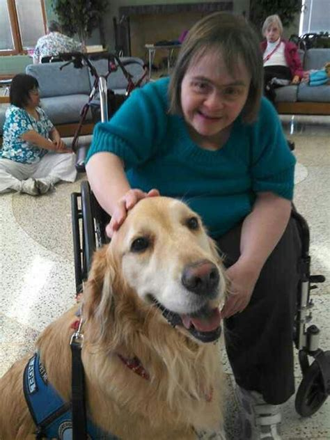 k 9 comfort dogs 26 best images about k 9 comfort dogs of lutheran church