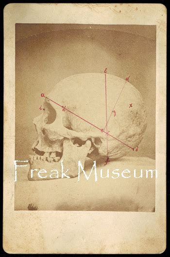 freak museum  private collection vintage photography