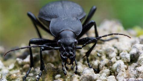 Nespied! Speciāliste nosauc labos dārza kukaiņus - DELFI