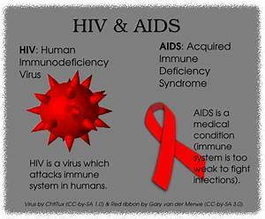 World AIDS Day 2012: When Will We Live in an AIDS-free ...