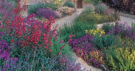 plants thatll   southern california garden