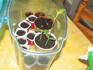 Planter Noyau Mangue : planter des graines et des p pins page 20 au jardin ~ Melissatoandfro.com Idées de Décoration