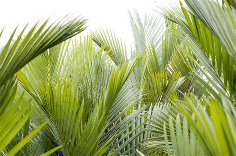 latar belakang tropis musim panas  hijau  daun