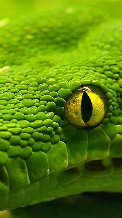Eyes Snake Galaxy Wallpapers Wallpapersafari S6