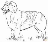 Shepherd Australian Coloring Pages Drawing Printable sketch template