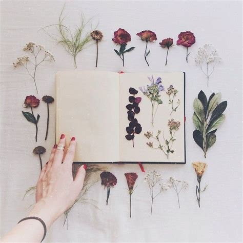 how to press flowers 25 best ideas about pressing flowers on pinterest dried flowers press flowers and press