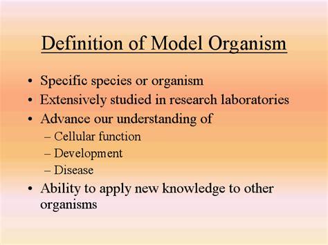 definition of model organism