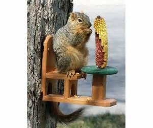 squirrel feeders