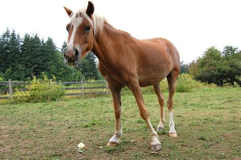 lameness horses causes source common ihearthorses infection steve via flickr