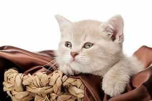 Mit Katze Umziehen : gute transportbox f r katzen tipps tricks ~ Michelbontemps.com Haus und Dekorationen