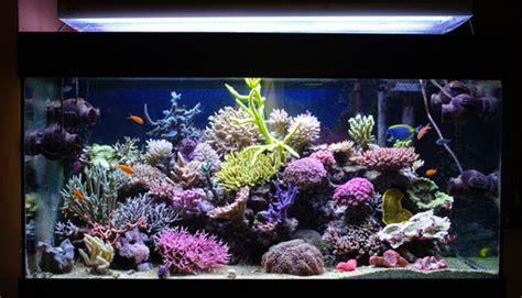 aquarium quel mod 232 le choisir selon l usage qu on en fait conseils