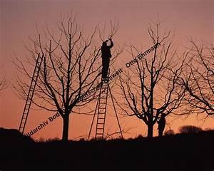 Bäume Schneiden Wann : bildarchiv boden ~ Lizthompson.info Haus und Dekorationen