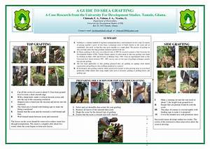 Pdf  A Guide To Shea Grafting  Poster Manual