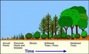 9 I  Plant Succession