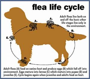 Best Flea Treatment for Dogs (November 2018) - Flea ...