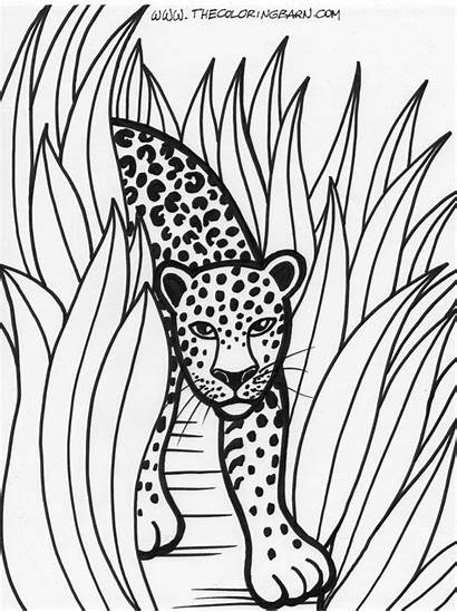 Jungle Coloring Pages Forest Educational