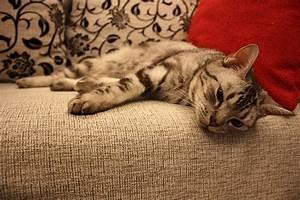 Katzenhaare Entfernen Kleidung : katzenhaare einfach entfernen ~ Orissabook.com Haus und Dekorationen