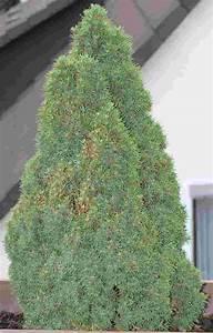 Was Ist Das Für Ein Baum : was ist das f r ein baum haus garten forum ~ Buech-reservation.com Haus und Dekorationen