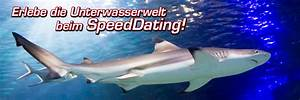 Sea Life Speyer Gutschein : speeddating im sealife speyer ~ Watch28wear.com Haus und Dekorationen