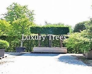 Natürlicher Sichtschutz Garten : sichtschutz luxurytrees sterreich ~ Watch28wear.com Haus und Dekorationen