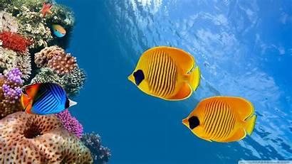 Fish Tropical Wallpapers