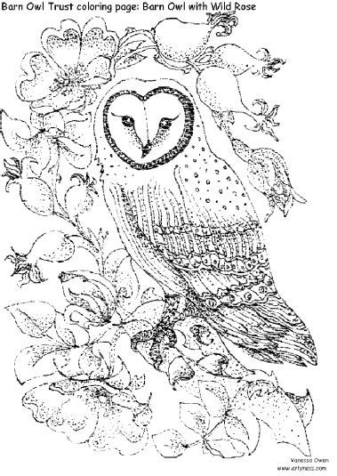 wild animal owl bird coloring books  print