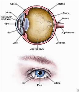 Cataracts  Healthwise Medical Information On Emedicinehealth