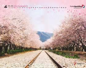South Korea Cherry Tree