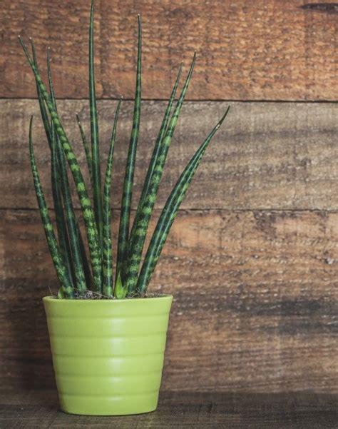 gorgeous indoor plants  love  dark bathrooms