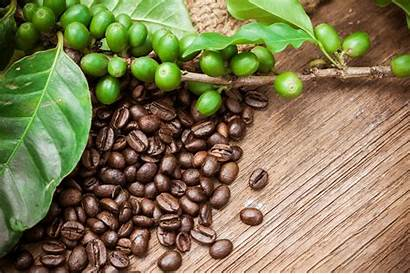 Coffee Bean Suppliers Nestle Beans Plant