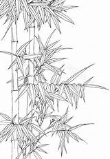 Bamboo Printable Ink Drawing Coloring Line Wash Oriental Watercolor Drawings Garden Botanic Etsy Pages Sold Colouring Botanical Flower sketch template
