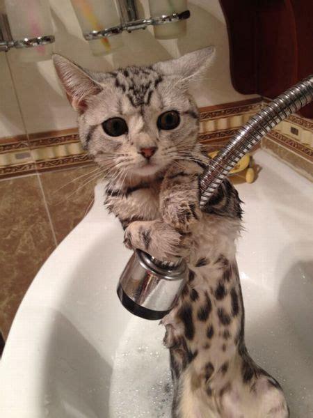 cat   shower luvbat