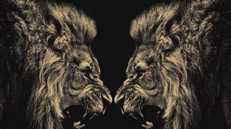 Fierce Animal Wallpapers - fierce animal wallpaper 392 wallpaper hd wallpaper